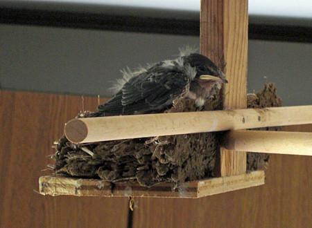 巣の端っこにいるチビ