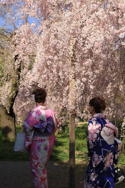 IMG_6402京都府立植物園・着物を着た女性と紅枝垂桜
