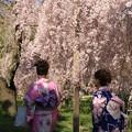 Photos: IMG_6402京都府立植物園・着物を着た女性と紅枝垂桜