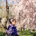 Photos: IMG_6403京都府立植物園・着物を着た女性と紅枝垂桜