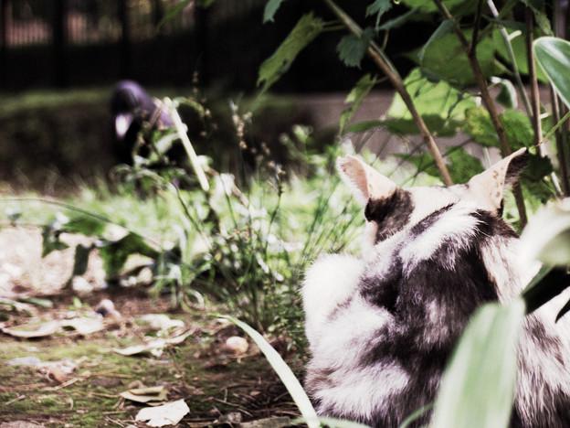 猫撮り散歩72S