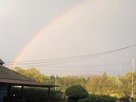 虹が出たけど・・・の巻