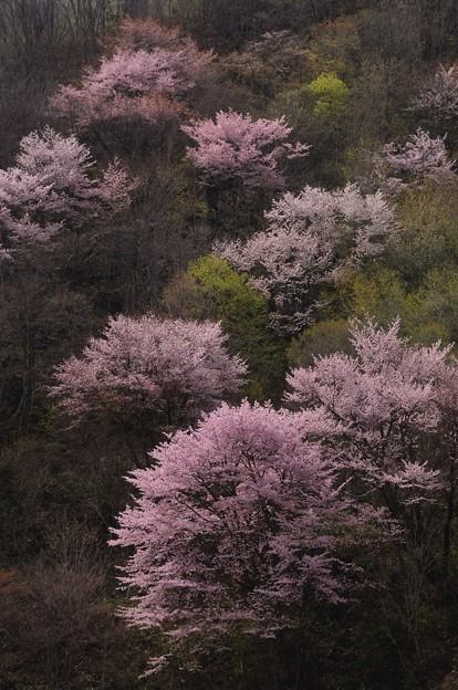 写真: 惜春の色彩