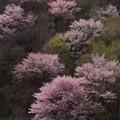 Photos: 惜春の色彩