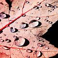 写真: 落葉と水滴