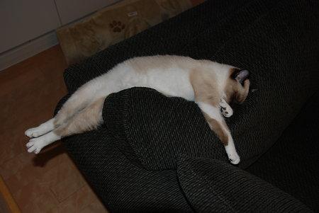 寝てるときも伸びてるのよ