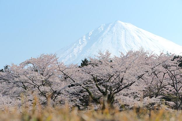 富士山 HDR
