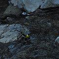 Photos: 水辺の採虫迷鳥^^