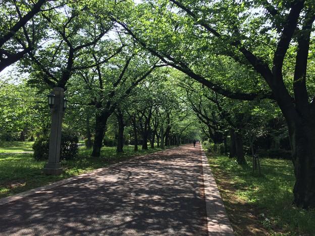140501 辰巳の森緑道公園