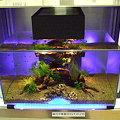 2009年度 第27回日本観賞魚フェア 水槽ディスプレイコンテスト ミニアクアリウムの部 準優勝