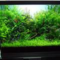 【作品】第26回日本観賞魚フェア 水槽ディスプレイコンテスト 60cm水槽部門 優勝