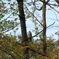 Photos: 鳴き声が樹上から聞こえてきました