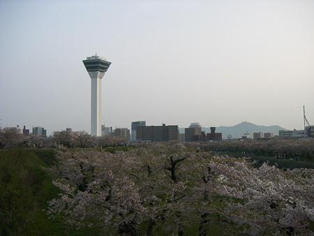 五稜郭のお堀 高台からタワーを望む