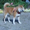 Photos: まぶしいな~~!