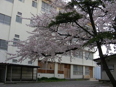 旧万代長嶺小学校脇の桜