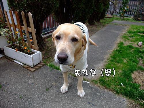 s-myu2008_1209(063)
