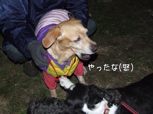 s-myu2008_1230(009)