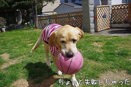 s-myu2009_0330(074)