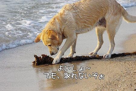 s-myu2009_0430(187)