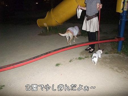 s-myu2009_0504(075)