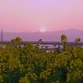 写真: ―暮れゆく春の日―