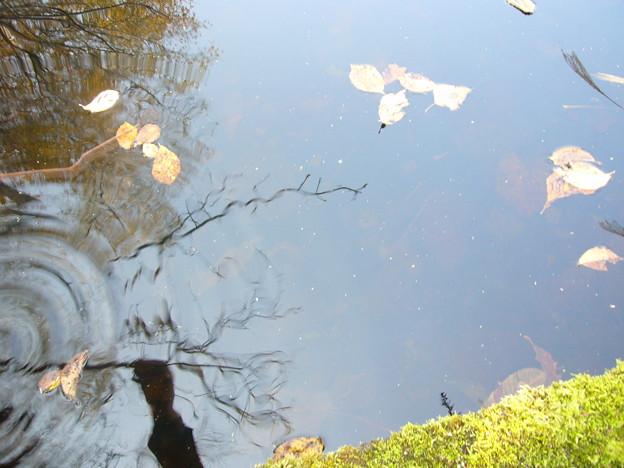 写真: プール跡