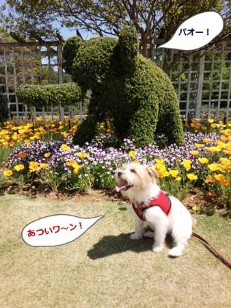 清水公園 花ファンタジア内