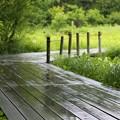 木道の梅雨8