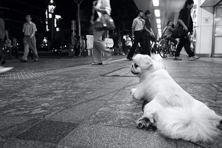 駅前の犬・無彩