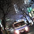 Photos: 桜潜車道