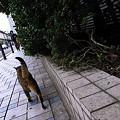Photos: 出勤猫景