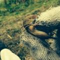 Photos: 土手の野ネズミ