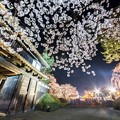 Photos: 城郭の夜桜@弘前