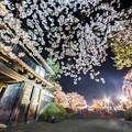 城郭の夜桜@弘前