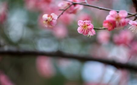 京都御苑12
