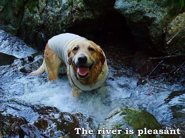 川は楽しいよ