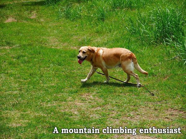 山登り好き