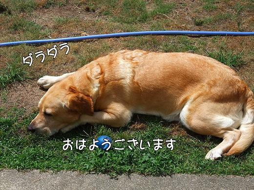s-2008_0730myu0001