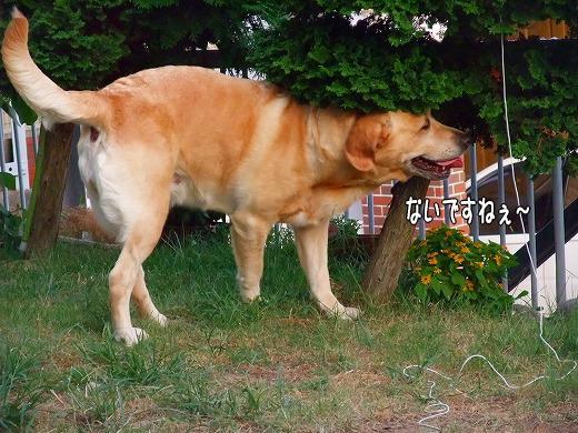 s-2008_0731myu0024