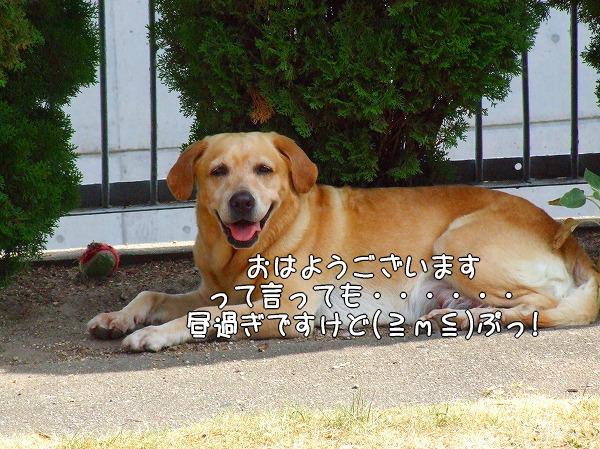 s-2008_0817myu0001
