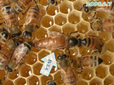 女王蜂 (バンド)の画像 p1_3