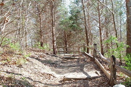 Cape Cod-Nauset Marsh Trail