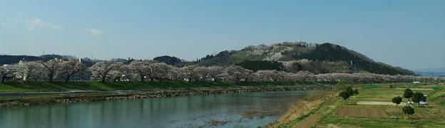 我が町 桜