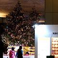 イルミネーション クリスマスツリーとアベック