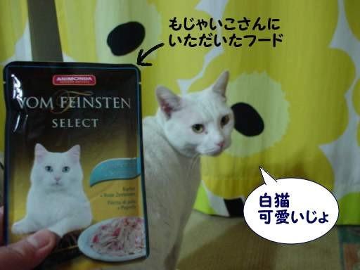 白猫のフード