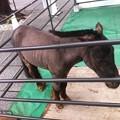 写真: 天野屋さんの隣の神田明神に来たらお馬ちゃんがいた。神馬らしい よ。