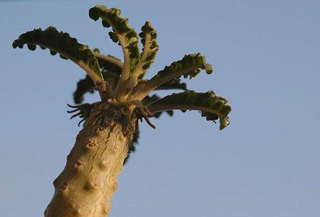 ヤシの木っぽく