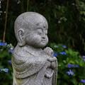 写真: 祈りと紫陽花