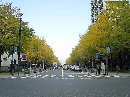 081128-日本大通り (1)