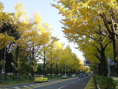 081128-山下公園通り (27)